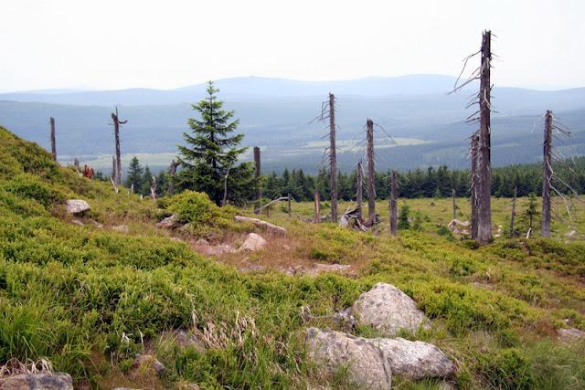 Erinnerung an das Waldsterben im Isergebirge in den 1980 ziger Jahren