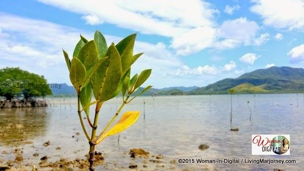 Dibuluan Island, El Nido, Palawan