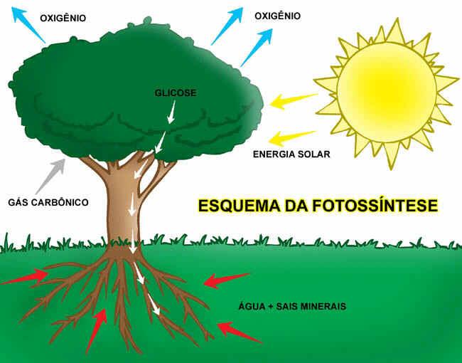 C mo obtienen las plantas su energ a p gina de for Como obtiene su alimento un arbol