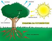 las plantas reciben su energia del sol