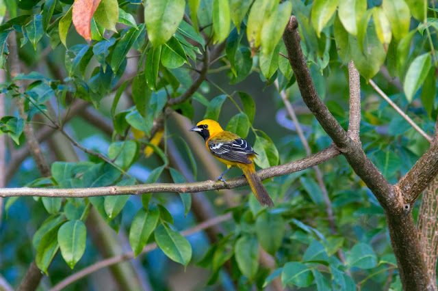 Bird Photography in the Yucatan Peninsula