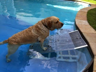 piscinas para cães
