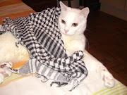 Mingau, o mais lindo gatinho!