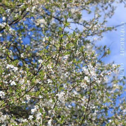 Piękną wiosnę mamy!