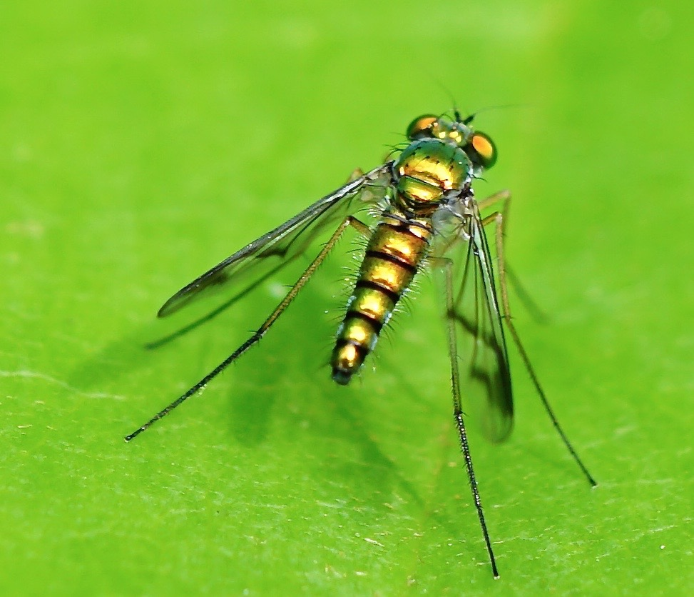 how to kill flies in your yard