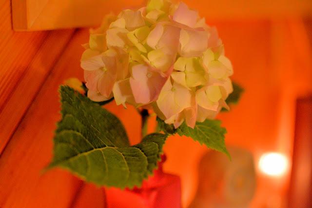 Hydrangea in vase