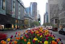 Chicago Magnificent Mile Tulips