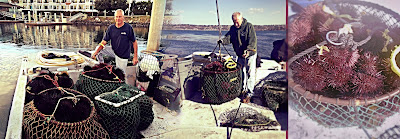 urchin diving, California Gold, uni-roe, thousand-pound urchin harvest, diver direct, boat-to-farmers-markets
