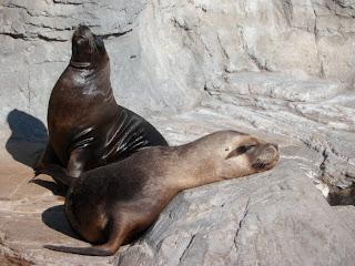 Sea lions in the sun at L 'Oceanogràfic Valencia