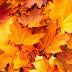 Podzimní TAG