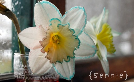 mothership adventures: Flower Science Experiment