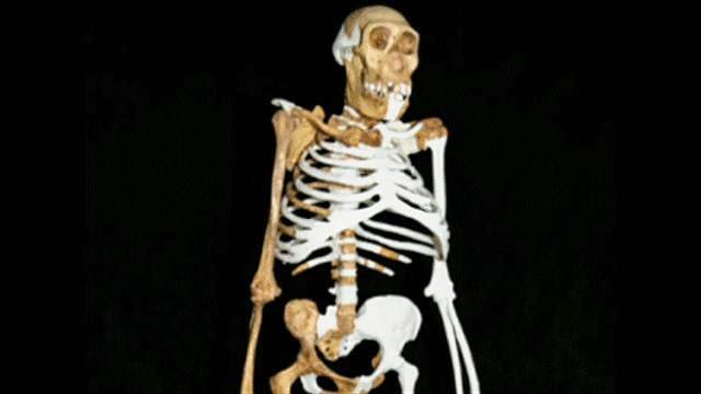 المكسيك: أكتشاف هيكل عظمي لأول بشر وطأوا العالم الجديد