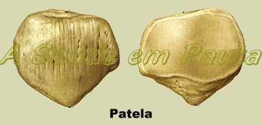 O Osso Patela é um osso da categoria Sesamóide, desenvolvem-se em certos tendões ou certas articulações e não se conectam a nenhum outro osso