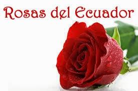 Rosas de Ecuador.