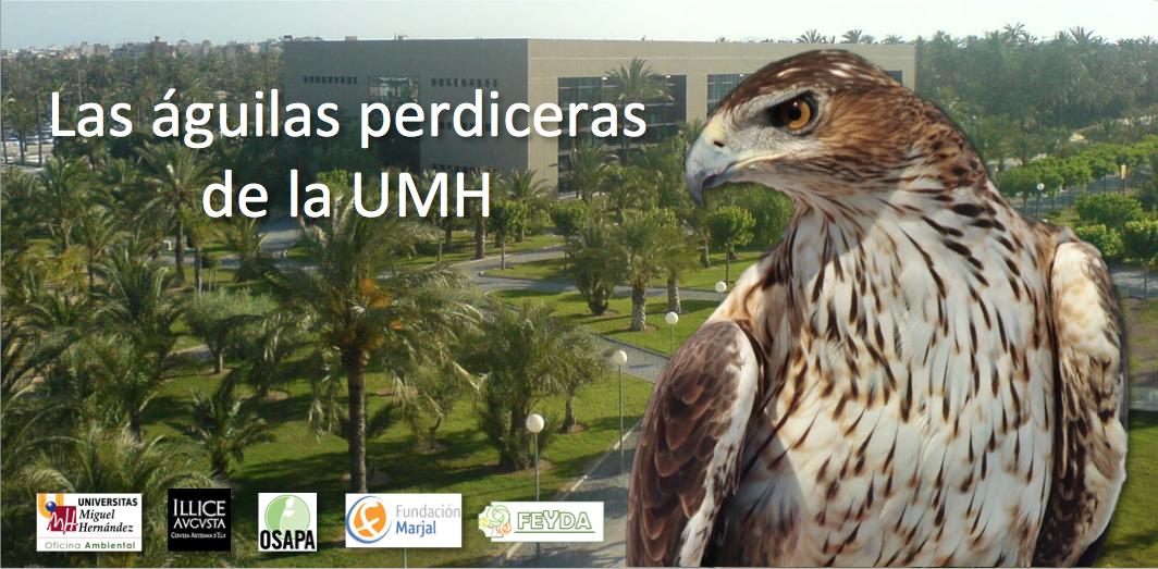 Las águilas perdiceras de la UMH
