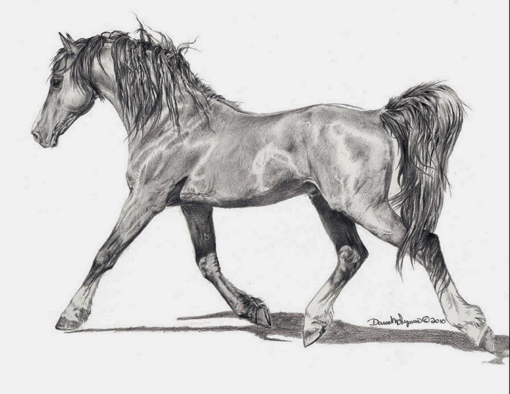 caballo-en-carboncillo
