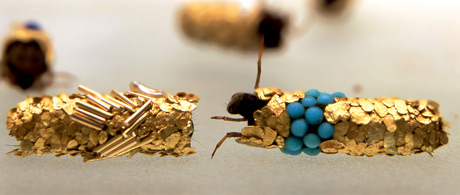 Hubert Duprat's 'Trichopetere' work in collaboration with the Caddis fly.
