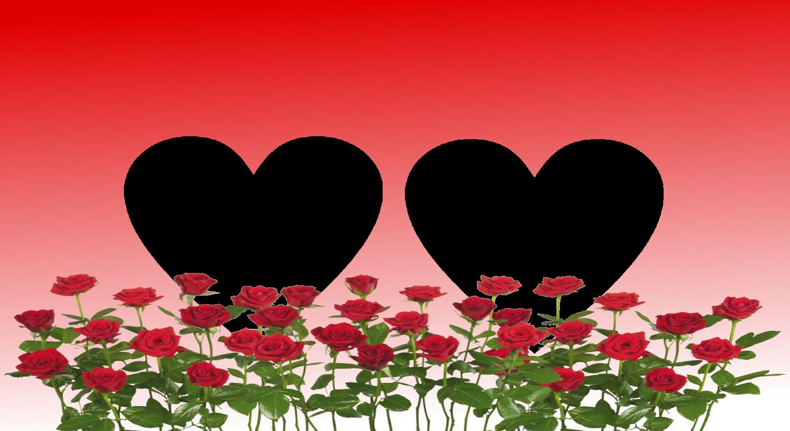 Corações TR num canteiro de rosas png