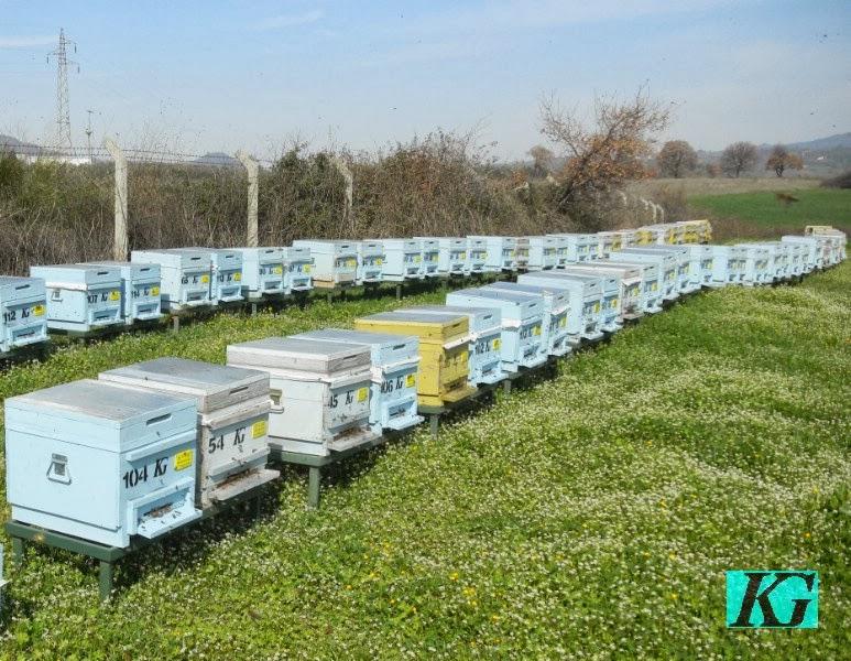Arıcılıkta İlkbahar Bakımı