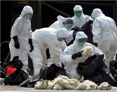 bird flu H7N9 2014