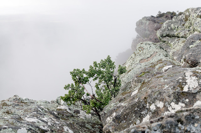 small tree at briggs bluff drop