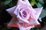 Todays Flower sunday