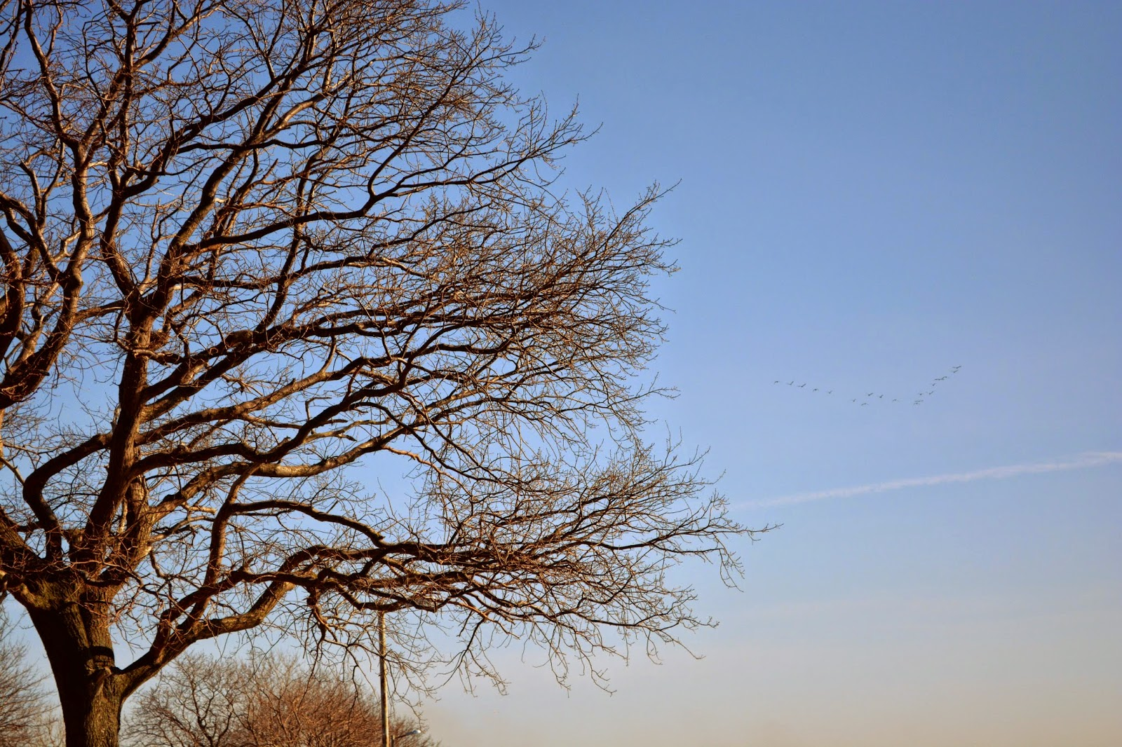 голые деревья