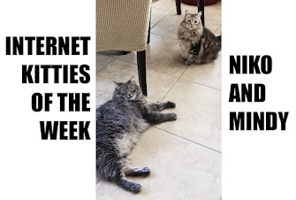 INTERNET KITTIES OF THE WEEK