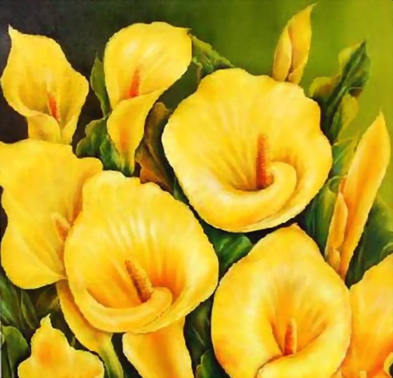 flores, imágenes Cartuchos wallpapers, vector de la flor