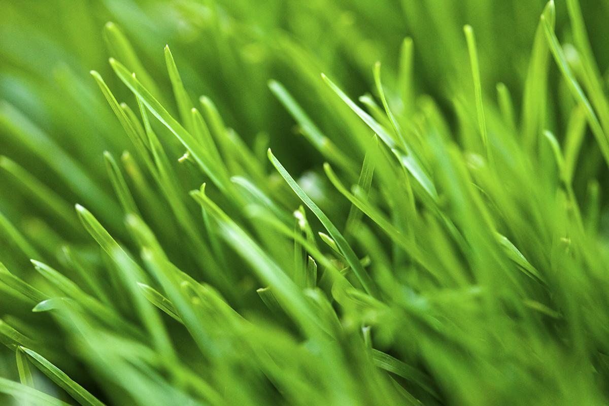 http://4.bp.blogspot.com/-vXbwAIVYRZU/Tcvn7c_6tgI/AAAAAAAAAiw/2k-djostuuU/s1600/Green+Grass.jpg