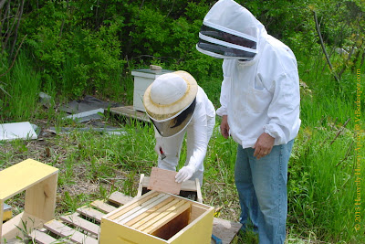 Beekeepers opening packaged bees