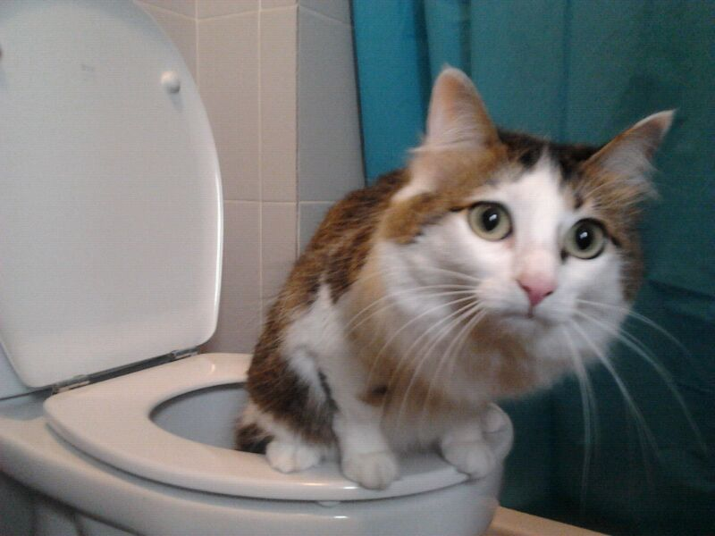 Funny cats - part 188, funny cat photo, best funny cat, cat picture gallery