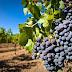 MOVI: un soplo de aire fresco en el vino chileno