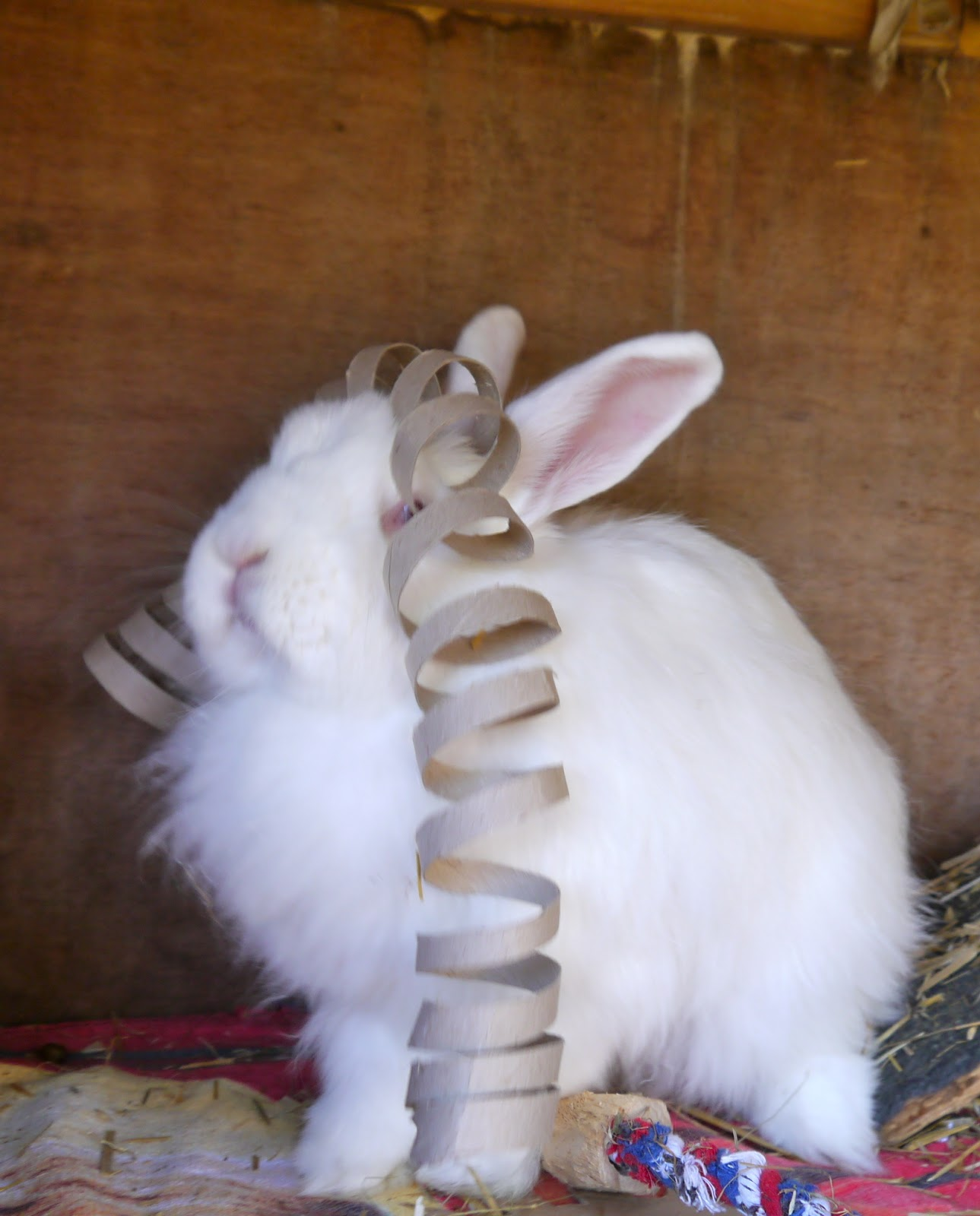 Toys For Bunnies : Sukilii the bunny challenge step two exercise post