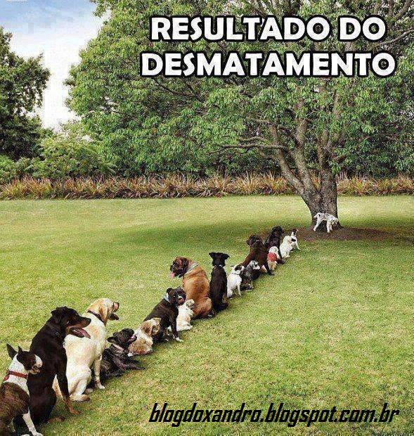 desmatamento.png (589×620)