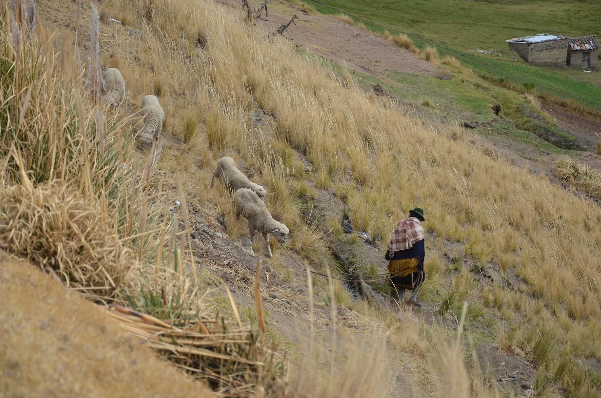 Circuito Quilotoa : Caminando hacia la permacultura en chemin vers la permaculture