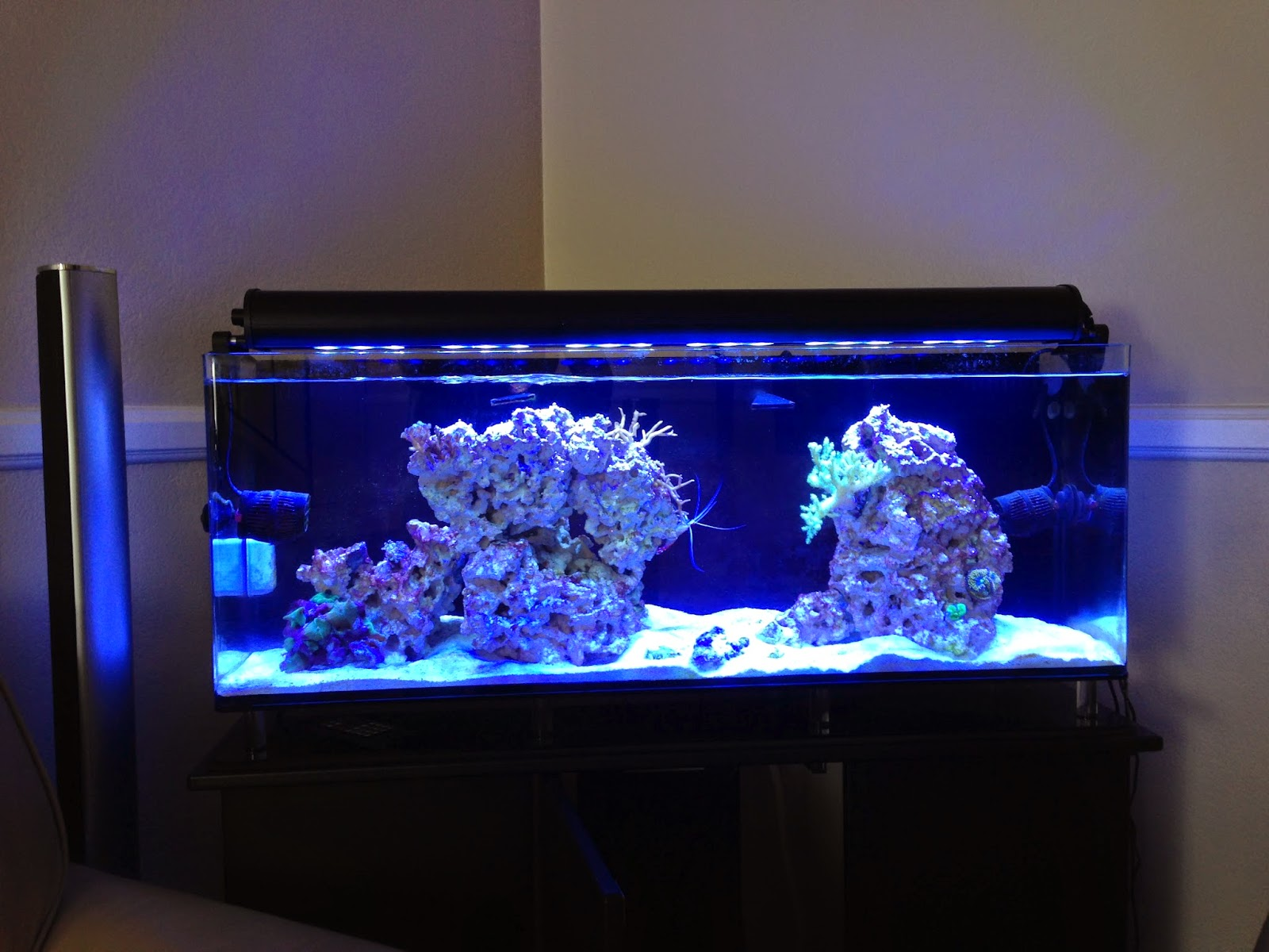 Saltwater aquarium - My First Saltwater Aquarium At Home Part 3 Going On Vacation