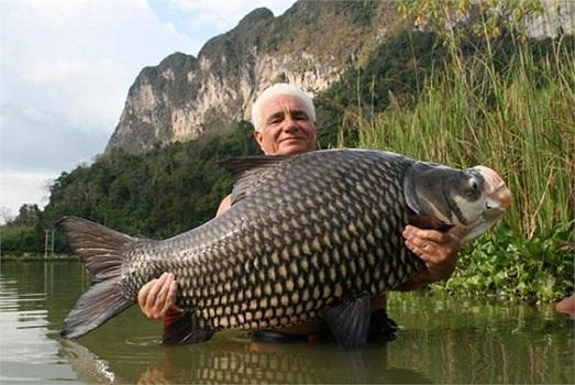 Cá hô sông Mekong
