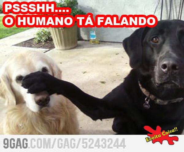 cachorros, humano falando, eeeita coisa