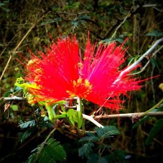 Flor na Trilha para As Cavernas de em Caçapava do Sul