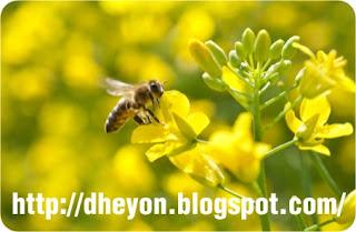 belajar hidup dari lebah
