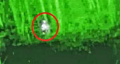 Alabama Bigfoot Flir