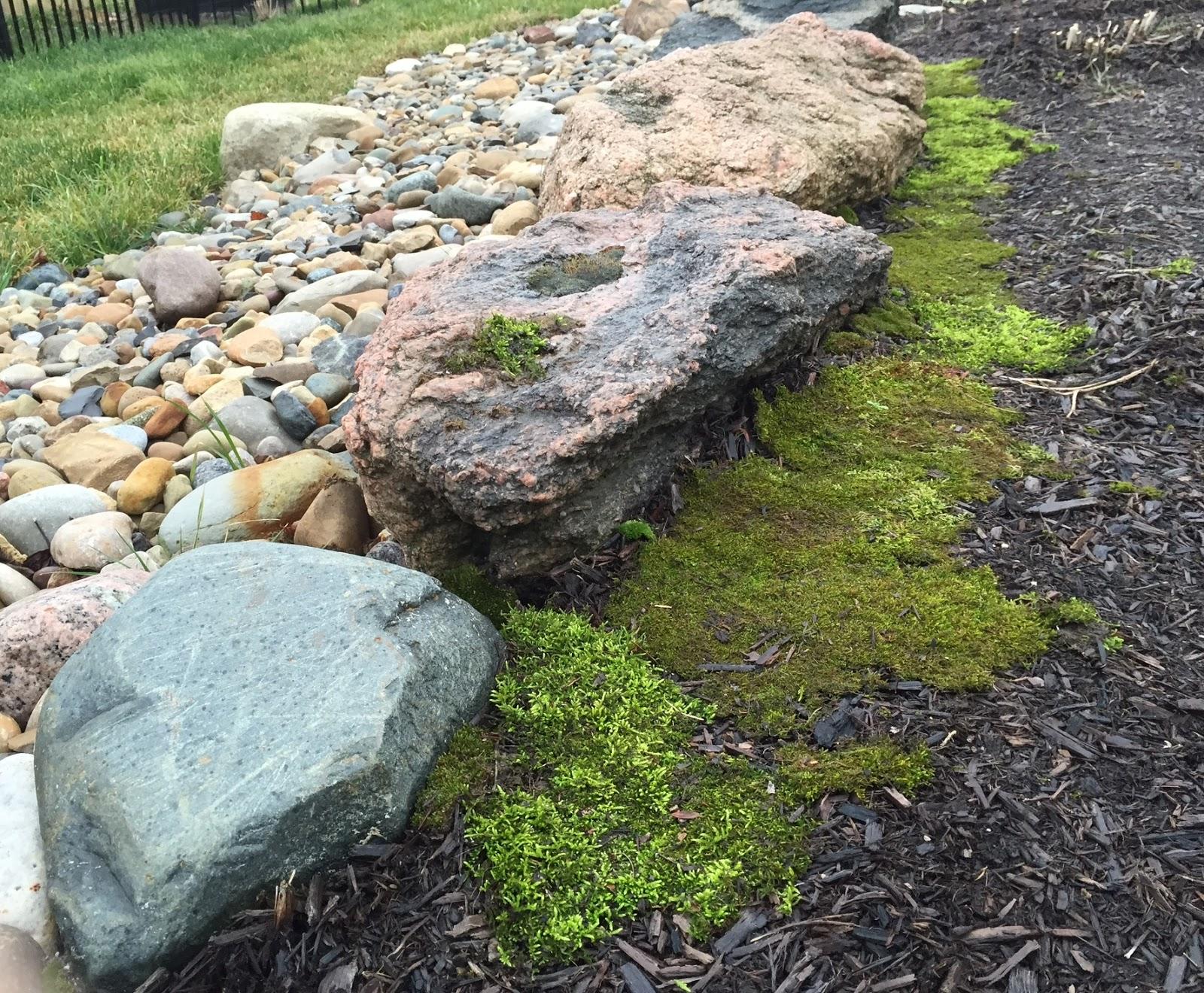 moss and rock garden