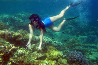 menyelam di perairan karimunjawa
