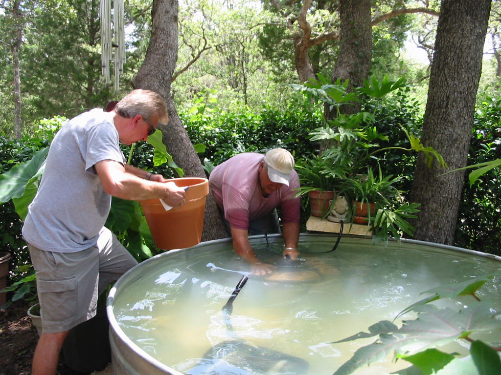 Turtle Ranch Tales Upgrade For The Fish Pond