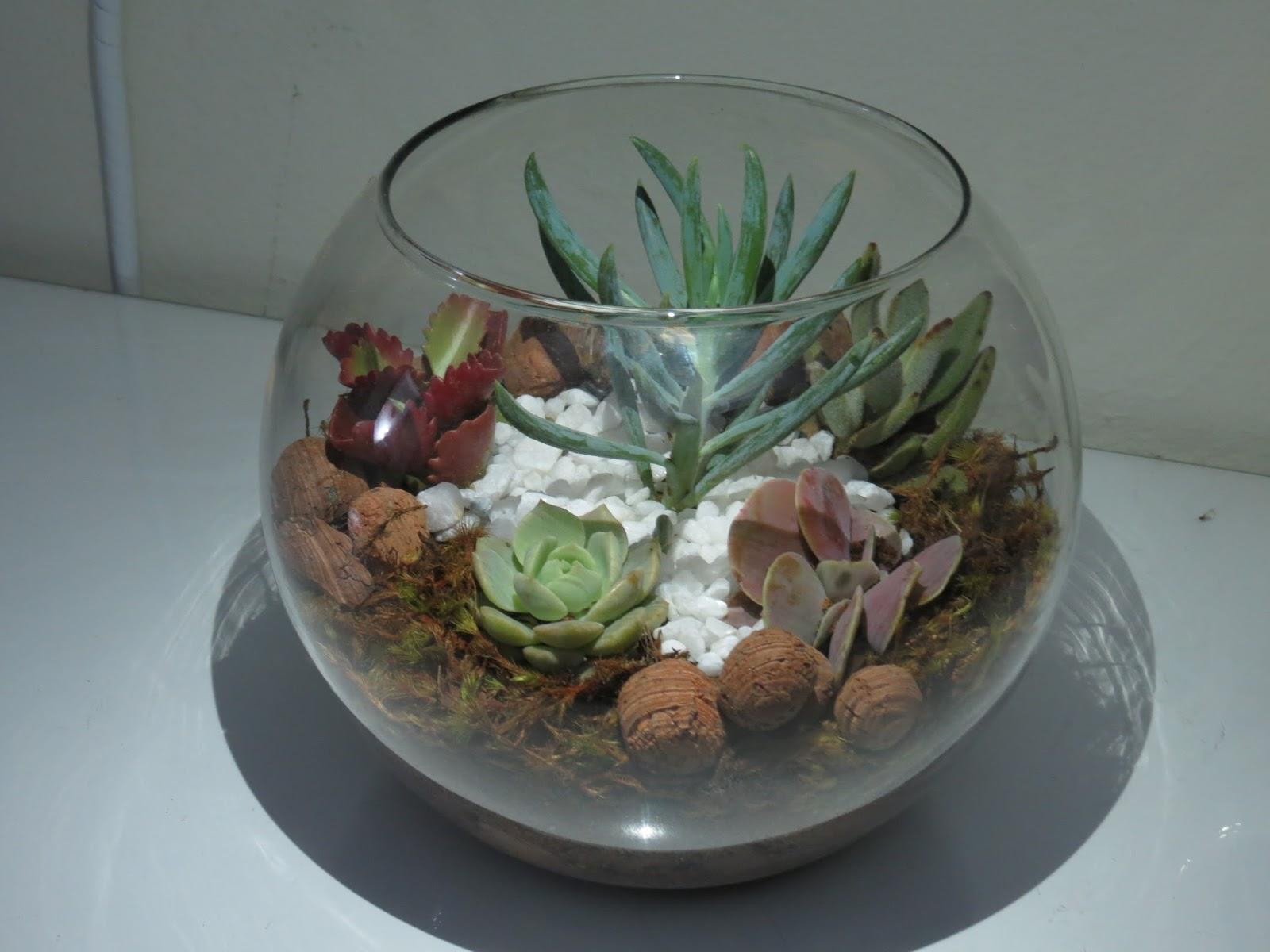mini jardim de vidro : mini jardim de vidro: de nada nessa vida abraços aos parceiros de profissão paulo heib
