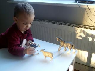Daniel uczy krowę siadać