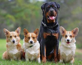 Alasan Ilmiah Kenapa Terkena Liur Anjing Harus Dibasuh Dengan Tanah [ www.BlogApaAja.com ]