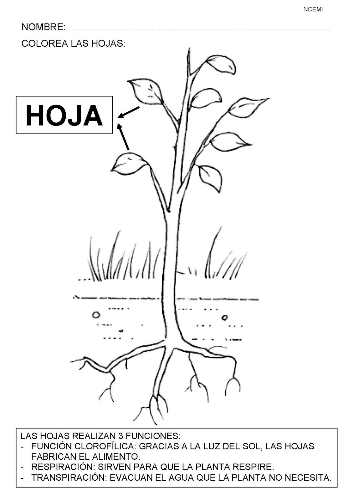 Life Cycle Apple Tree Coloring Page