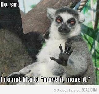 funny pet move it move it